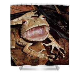 Johnsons Horned Treefrog Hemiphractus Shower Curtain by Michael & Patricia Fogden