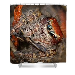 Jumping Spider Portrait Shower Curtain