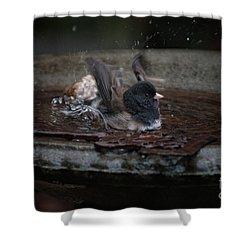 Shower Curtain featuring the digital art Junco In The Birdbath by Carol Ailles