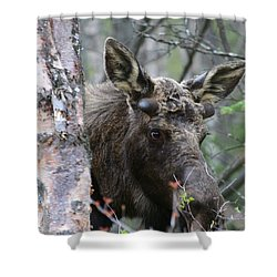 Shower Curtain featuring the photograph Just A Start by Doug Lloyd