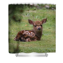 Just Born Bambi Shower Curtain by Kym Backland