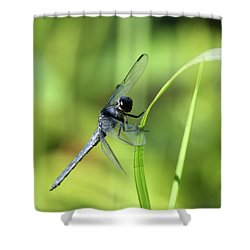 Just Hanging On Shower Curtain by Karol Livote
