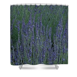 Shower Curtain featuring the photograph Just Lavender by Manuela Constantin