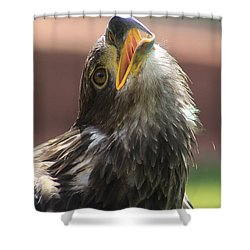 Shower Curtain featuring the photograph Juvenile Bald Eagle by Alyce Taylor