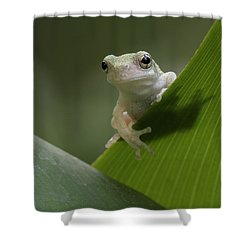 Shower Curtain featuring the photograph Juvenile Grey Treefrog by Daniel Reed