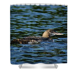 Juvenile Loon Shower Curtain