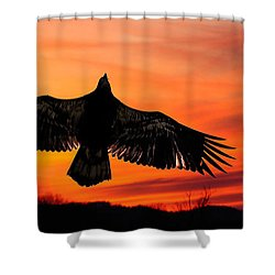 Shower Curtain featuring the photograph Juvenile Sunset  by Randall Branham