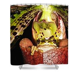 Kangaroo Frog Shower Curtain by Jean Noren