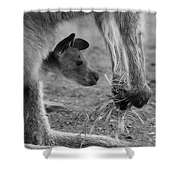 Kangaroo Joey Shower Curtain by Camilla Brattemark