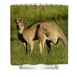 Kangaroo Male Shower Curtain by Bob Christopher