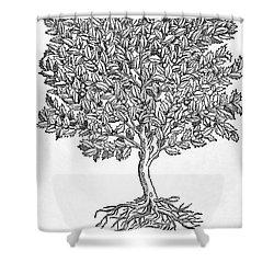 Kermes Oak Tree Shower Curtain by Granger