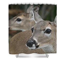 Key Deer Florida Shower Curtain by Valia Bradshaw