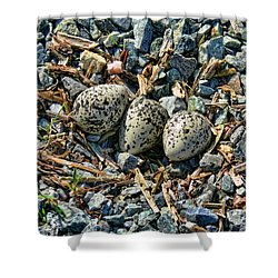 Killdeer Bird Eggs Shower Curtain by Jennie Marie Schell