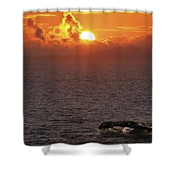 Killer Whale In The Water Shower Curtain by Richard Wear