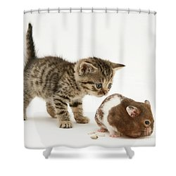 Kitten And Hamster Shower Curtain by Jane Burton