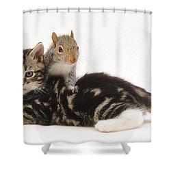 Kitten And Squirrel Shower Curtain by Jane Burton