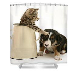 Kitten In Pot With Pup Shower Curtain by Jane Burton