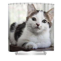 Kitten In The Window Shower Curtain