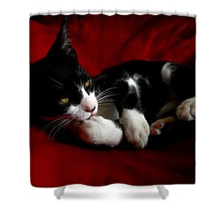 Kitten On Red Take Two Shower Curtain
