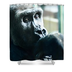 Kivu The Gorilla Shower Curtain by Bill Cannon