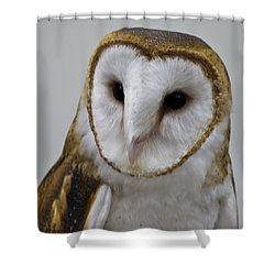 Knowing Barn Owl Shower Curtain by LeeAnn McLaneGoetz McLaneGoetzStudioLLCcom