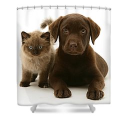 Labrador Pup And Birman-cross Kitten Shower Curtain by Jane Burton