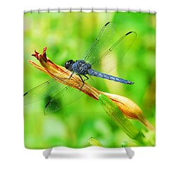 Lace Wings Shower Curtain by Cindy Manero