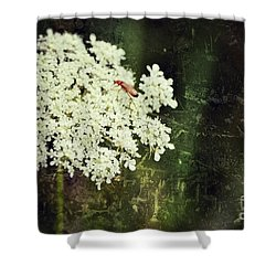 Lacy Anne Shower Curtain