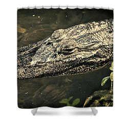 Lady Alice Queen Of The Lake Shower Curtain by Joan Carroll