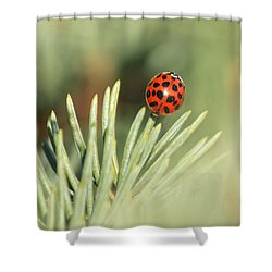 Shower Curtain featuring the photograph Lady Beetle On A Needle by Penny Meyers