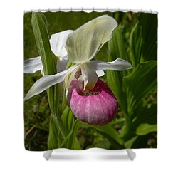 Pink Lady Slipper - Cypripedium Acaule Ait. Shower Curtain