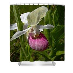 Pink Lady Slipper - Cypripedium Acaule Ait. Shower Curtain by Blair Wainman