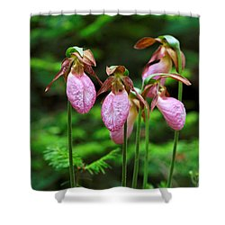 Lady Slippers Everywhere Shower Curtain