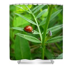 Shower Curtain featuring the photograph Ladybug And Bud by Renee Trenholm