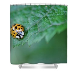 Ladybug Posing On Astilbe Leaf Shower Curtain