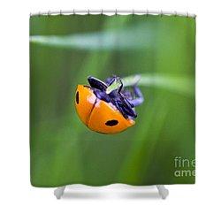 Ladybug Topsy Turvy Shower Curtain by Donna Munro