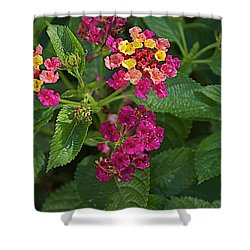 Shower Curtain featuring the photograph Lantana by Joseph Yarbrough