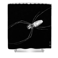 Large Spider X-ray Shower Curtain by Ted Kinsman
