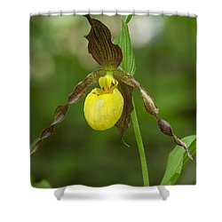 Large Yellow Lady Slipper Orchid Dspf0251 Shower Curtain
