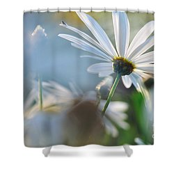 Late Sunshine On Daisies Shower Curtain by Kaye Menner