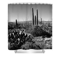 Late Winter Desert Shower Curtain by Chad Dutson