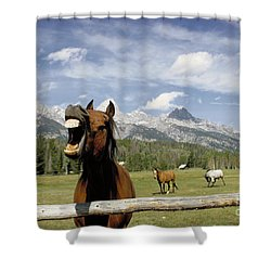 Laughing Horse Shower Curtain by Porterfld and Chickerng and Photo Researchers