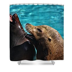 Laughing Seals Shower Curtain by Karol Livote