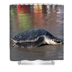 Laurel The Sea Turtle Shower Curtain