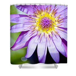 Lavendar Water Lily Shower Curtain by Kicka Witte