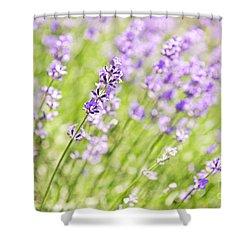 Lavender Blooming In A Garden Shower Curtain by Elena Elisseeva