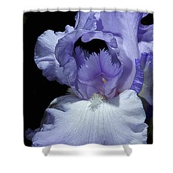 Lavender Blue Iris Shower Curtain by Phyllis Denton