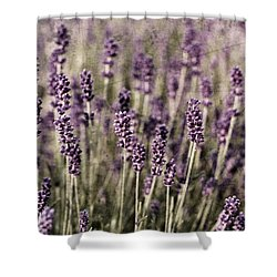 Lavender Field Shower Curtain by Laura Melis
