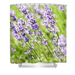 Lavender In Sunshine Shower Curtain by Elena Elisseeva