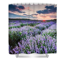 Lavender Sea Shower Curtain by Evgeni Dinev